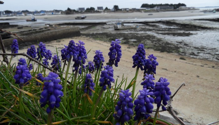 Les fleurs du Pô
