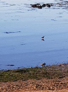 observation ornithologique gite nature gite carnac 56